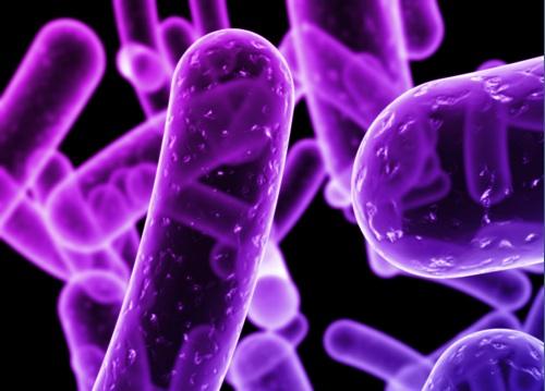 MICROBIOLOGÍA CLÍNICA APLICADA AL LABORATORIO
