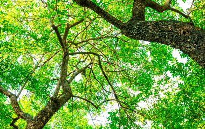 Repoblaciones forestales y tratamientos silvícolas