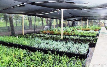 Actividades Auxiliares en Viveros, Jardines y Centros de jardinería