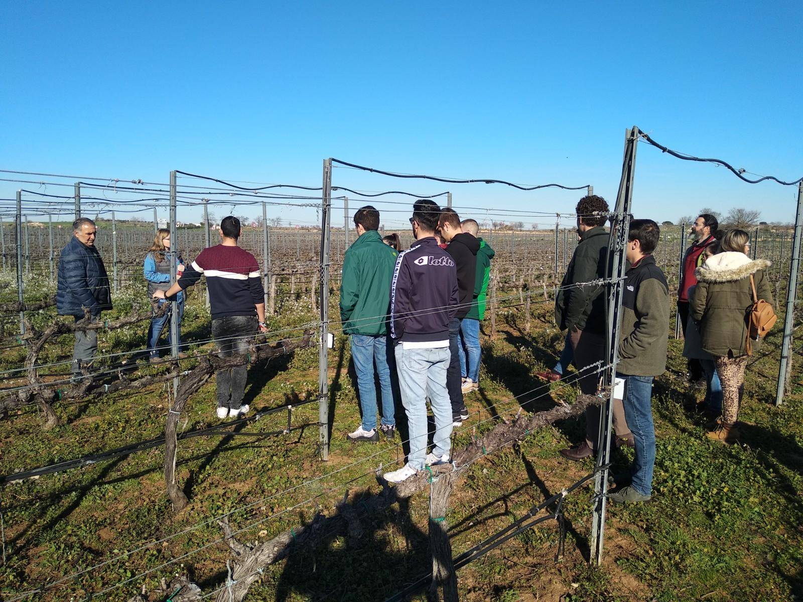 Visita Finca El Socorro y bodega DO Vinos de Madrid